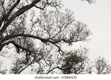 silhouette of dried tree branch