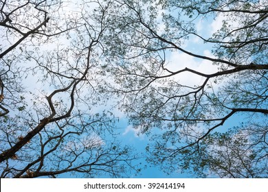 Silhouette of dry tree branches with sky and cloud background.