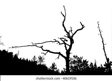 silhouette dry tree on white background