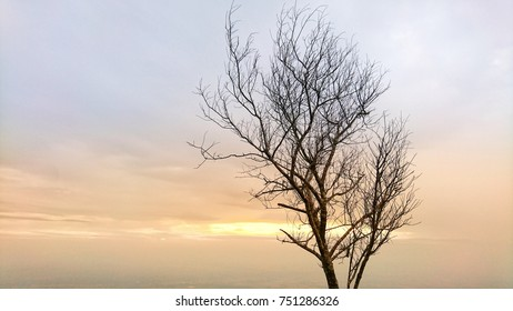 silhouette of dry tree at sunrise, tree silhouette background