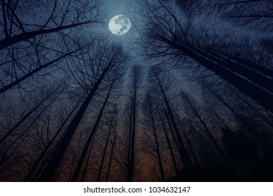 silhouette of dry trees with full moon light background