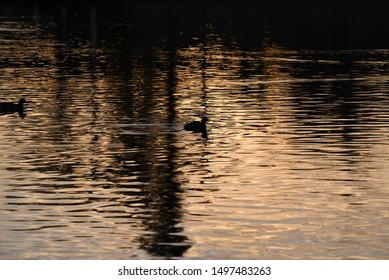 Silhouette Of a duck on a pond sunset