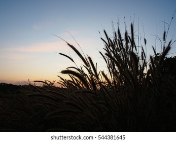 silhouette dusk evening sunset sky and shadow field of grass nature background