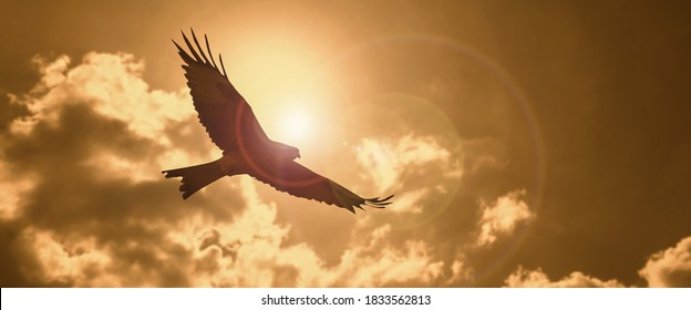 a silhouette eagle flying in clouds at sunset.
