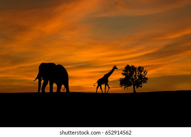 Silhouette of elephant and giraffe with sunset. Element of design.