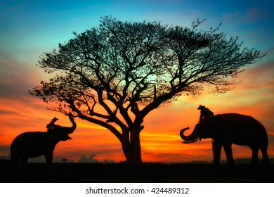 Silhouette Elephant and mahout at sunset