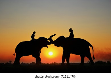 Silhouette Elephant and mahout with sunset sky in surin thailand.