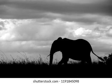 Silhouette of a Elephant, Masai Mara