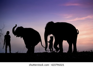 silhouette of elephant on hill
