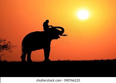 Silhouette Elephant sunrise. Mahout riding an elephant on the sunrise.