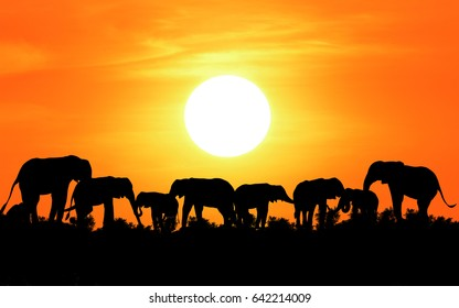 silhouette elephant with sunset background in safari