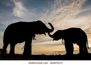 The silhouette of elephants against golden and blue sky