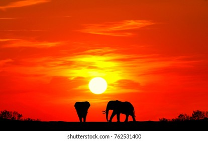Silhouette of elephants and giraffes with sunset. Element of design.