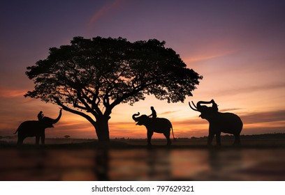 Silhouette of Elephants in the landscape,Surin province,Thailand,