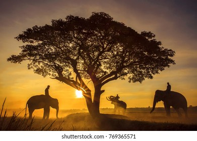 Silhouette elephants and trees in the sunset