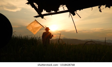 Silhouette Farmer standing with plastic flags in front of the sun in the rice fields during sunset, view from the cottage.