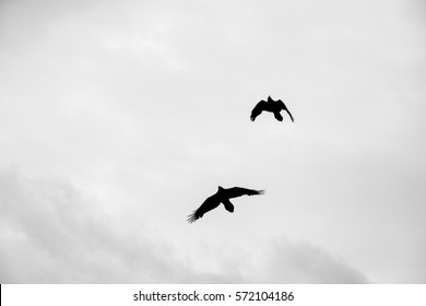 The silhouette of a few ravens flying beneath a cloudy sky at Yellowstone National Park.