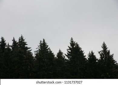 Silhouette of firs tree tops in coniferous forest against white clouds. Styria mountains, Austria
