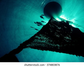 Silhouette of Fish Aggregating at a Device Buoy