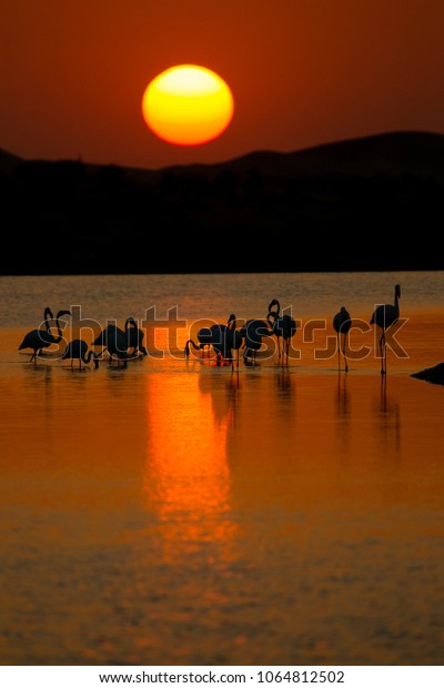 The silhouette of the Flamingos against the sunset at Al Qudra Lake is a beautiful sight. The reflection of the sun and the colours of the sunset are captivating.
