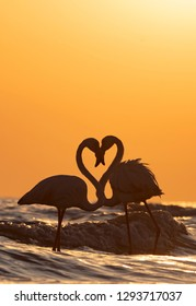silhouette of flamingos with touching head, at Mandvi, Gujarat, India