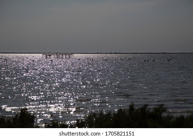 Silhouette of flamingos in the water in the rays of the setting sun, summer evening in Camargue France, 2018.