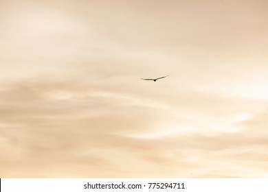 Silhouette flight / back lit silhouette of a bird against the cloudy sky