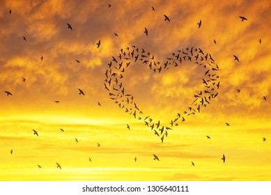 Silhouette of a flock of birds flying in the heart formation at sunset sky.