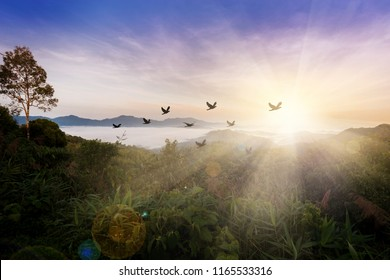 Silhouette flock of birds flying over the valley on  sunbeam twilight cloud sky at sunrise.The freedom of birds,freedom concept.