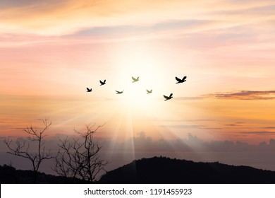 Silhouette flock of birds flying over mountain coastline with twilight horizon sea sky at sunset. Birds flying in sunray.