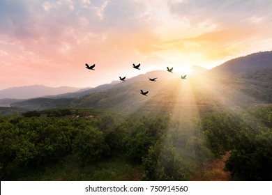 Silhouette flock of birds flying over the valley on  sunbeam twilight sky at sunset. Birds flying. The freedom of birds,freedom concept.