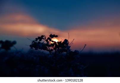 Silhouette flowers with afternoon dark sunlight unique photo