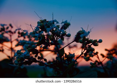Silhouette flowers with dark afternoon sunlight background