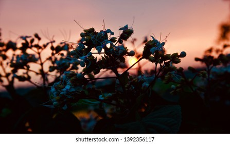 Silhouette flowers with natural afternoon sky background photo