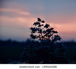 Silhouette flowers of a plant in the afternoon