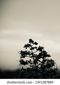 Silhouette flowers of a tree unique black and white photo