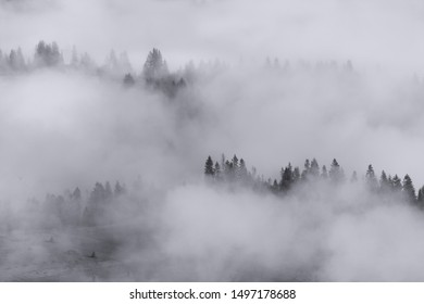 Silhouette of foggy forest in Mountains valley - black and white colors, landscape background