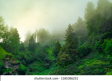 Silhouette of forested himalayas mountain slope with the evergreen conifers shrouded in misty sceinic landscape view from prashar lake base camp at height of 2730m near Mandi, Himachal Pradesh, India.