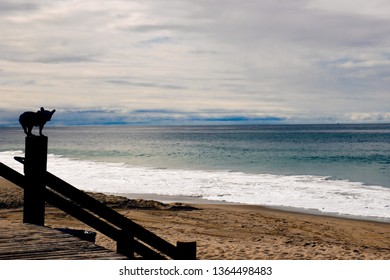A silhouette of a French bulldog standing on a fence post and looking at the ocean horizon