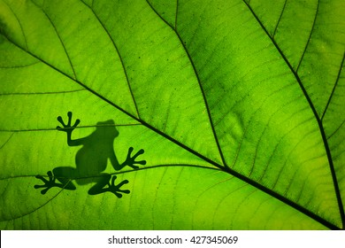 Silhouette of a frog across a green leaf