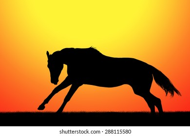 Silhouette of galloping horse on sunset background