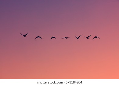 The silhouette of geese flying against a colorful sky