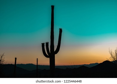 Silhouette of the giant Saguaro Cactus at sunrise or sunset in the Sonoran Desert in Saguaro National Park in Tuscon, Arizona, USA