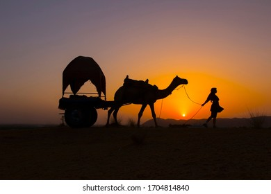 Silhouette of a girl with a camel in Pushkar and a sunset background