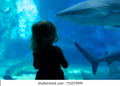 The silhouette of a girl curiously looking at the sharks in an aquatic tank