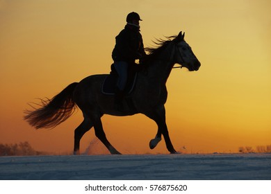 Silhouette of a girl and horse at sunset