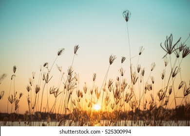 silhouette of grass flower on sunset background,  vintage style