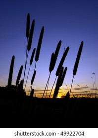 Silhouette of Grass Flowers with Sun Set in the Background