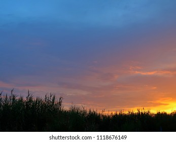 Silhouette of grass with sky at sunset time