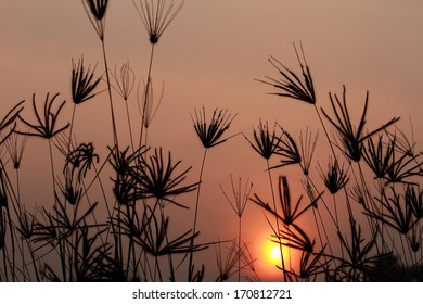 Silhouette of grass And sunset